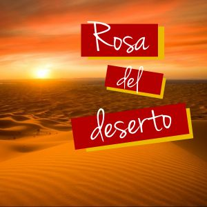 Rosa del deserto - Made with PosterMyWall